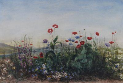 July Wild Flowers