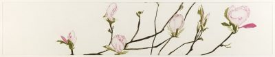 Tullynally Magnolias 2