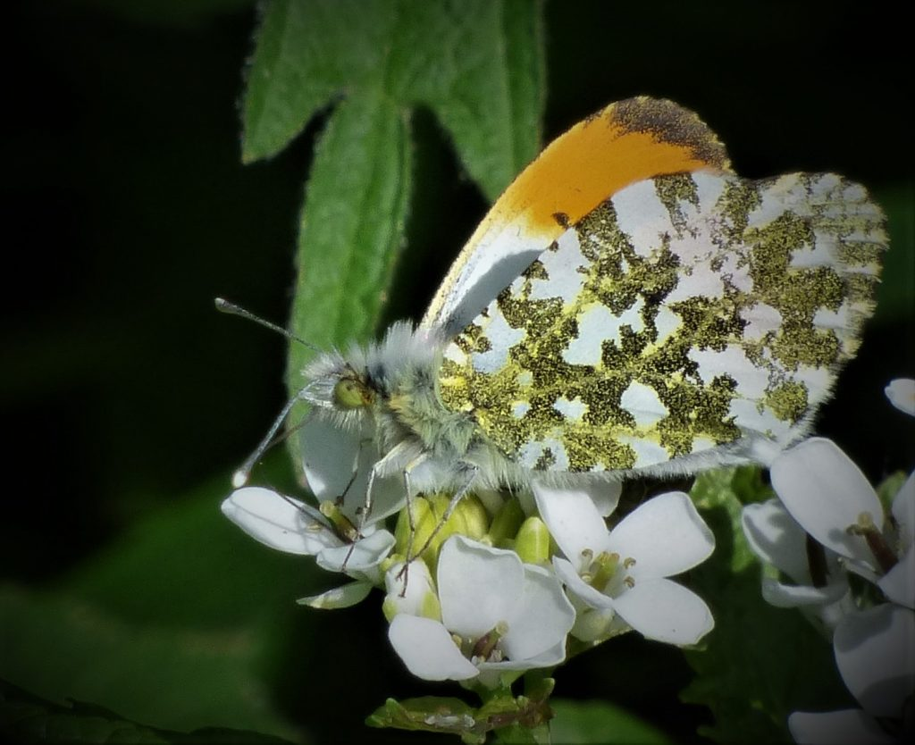 Growing wild at IMMA (Butterflies)