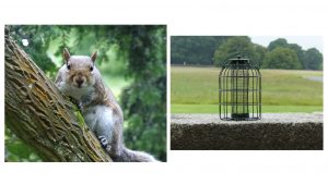 1. Grey Squirrel. 2. Squirrel-proof birdfeeder.