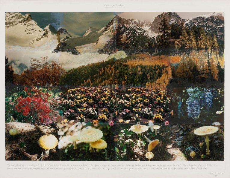 Peter Hutchinson, Botanical Gardens, 1994, Photocollage, Framed: 105 x 139.5 cm 81.3 x 119.4 cm, Collection Irish Museum of Modern Art, Donation Novak/O'Doherty Collection, via American Ireland Fund, 2014, 2014