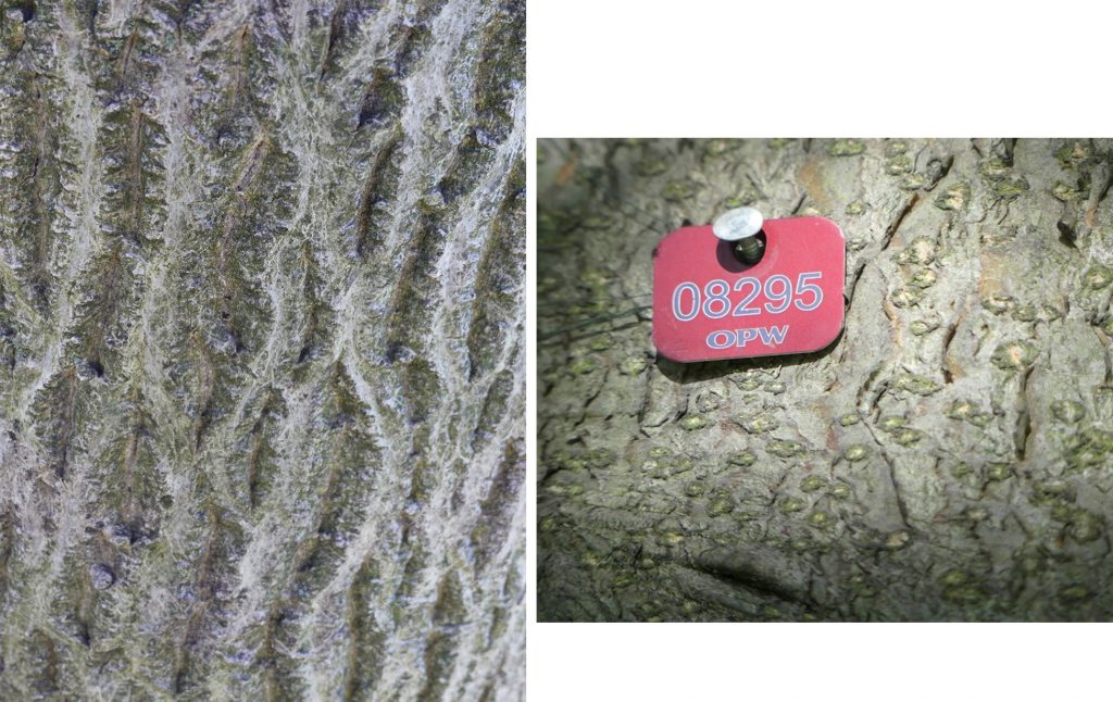 1. Bark of walnut tree in the Formal Gardens.<br>2. OPW Tree Tags