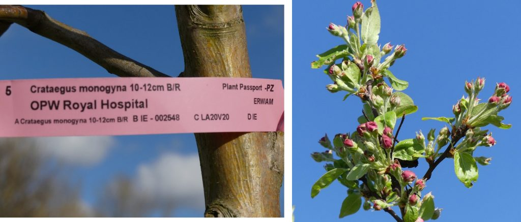 1. New planting on the perimeters of the meadows.<br>2. Spring flowering on crab apple tree.